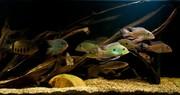 Аквариумные рыбки редкие виды в наличии.